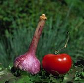 Vitlök och tomat
