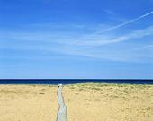 Träspång på sandstrand