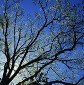 Nyutslaget träd