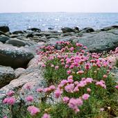 Strandtrift