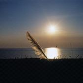 Fjäder på strand, i solnedgång
