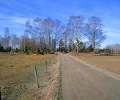 Landsväg - vår
