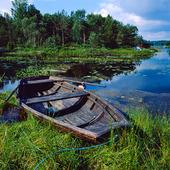 Eka i Oxsjön, Västergötland