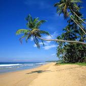Palmstrand i Sri Lanka