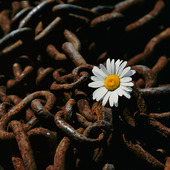Flower of rusty chain