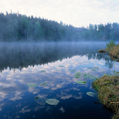 Dimma vid skogstjärn