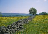 Stenmur i vårlandskap