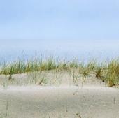 Sanddyn