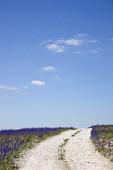 Kalkstensväg