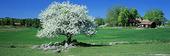 Blommande träd i landsbygd