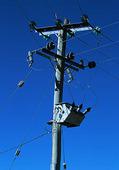 Telegrafstolpe, Tasmanien