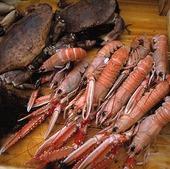 Havskräftor och krabbor