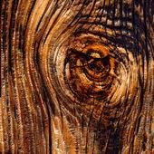Träkvist