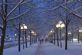 Vinter i Kungsträdgården, Stockholm