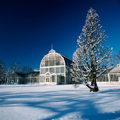 Palm House in the winter, Gothenburg