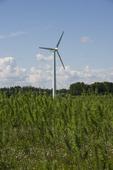 Vindkraftverk och energiskog.