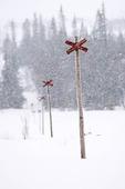 Ledkryss i snöväder