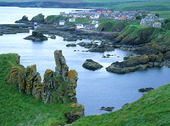 St Abbs Head, Skottland