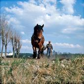 Bonde plöjer med häst