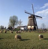 Väderkvarn, Nederländerna