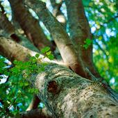 Trädstam