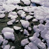 Isbitar på klippa