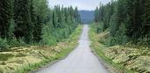 Smal väg i Lappland