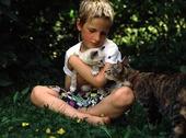Pojke och katter