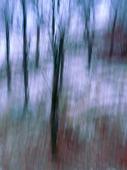 Oskarpa träd på vintern