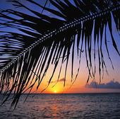 Palmblad i soluppgång