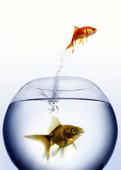 Fisk som hoppar ur vattenskål