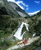 Häst och vagn, Norge