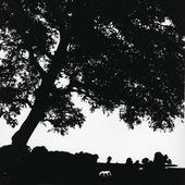 Häst under träd