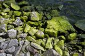 Stenar med alger