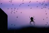 Spindel med insekter i nätet
