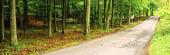 Mindre väg genom skog