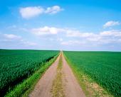 Mindre väg genom jordbrukslandskap