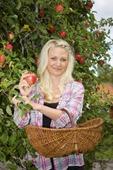 Kvinna plockar äpplen