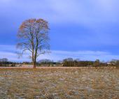 Landskap - höst
