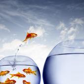 Guldfisk hoppar till större vattenskål
