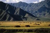Jordbrukslandskap i Tibet, Kina