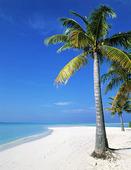 Palm på sandstrand